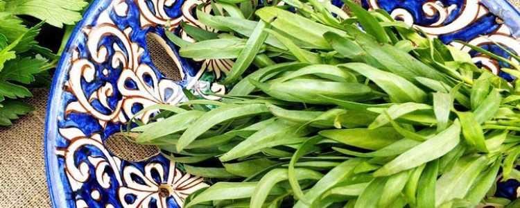 Эстрагон, он же Тархун: трава-пряность с полезными свойствами
